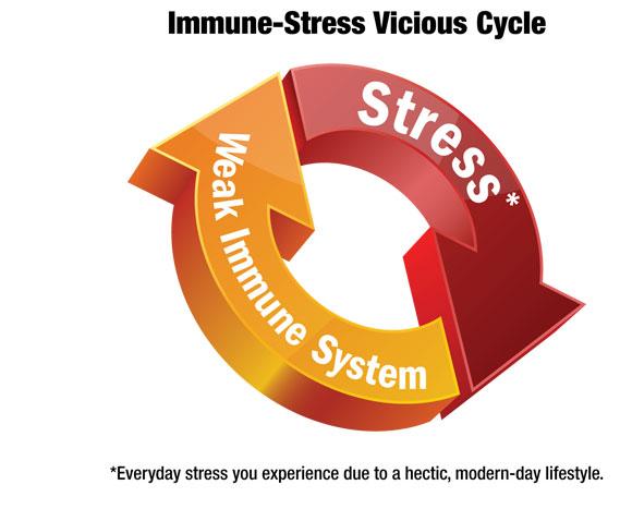 Η κόπωση των επινεφριδίων (adrenal fatigue), επιφέρει την πτώση της λειτουργίας του ανοσοποιητικού συστήματος  (immune system)  του οργανισμού