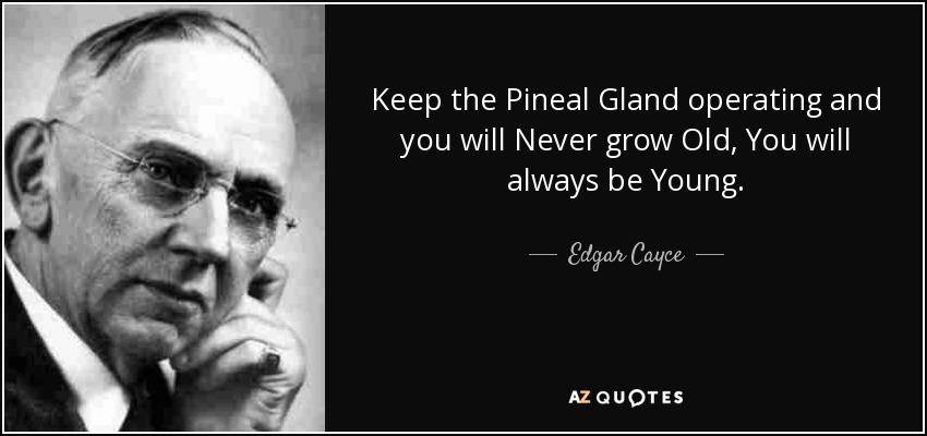 Λειτουργία της επίφυσης (pineal gland) *