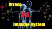 Stress και κορτιζόλη, ανοσοποιητικό σύστημα και βλαστοκύτταρα*