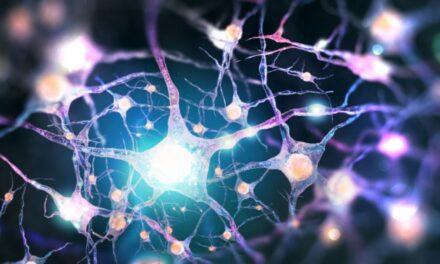 Γηράσκουν τα εγκεφαλικά κύτταρα με την πάροδο της ηλικίας;                Ο ρόλος των βλαστοκυττάρων του εγκεφάλου και τρόποι ενίσχυσης της εγκεφαλικής λειτουργίας *